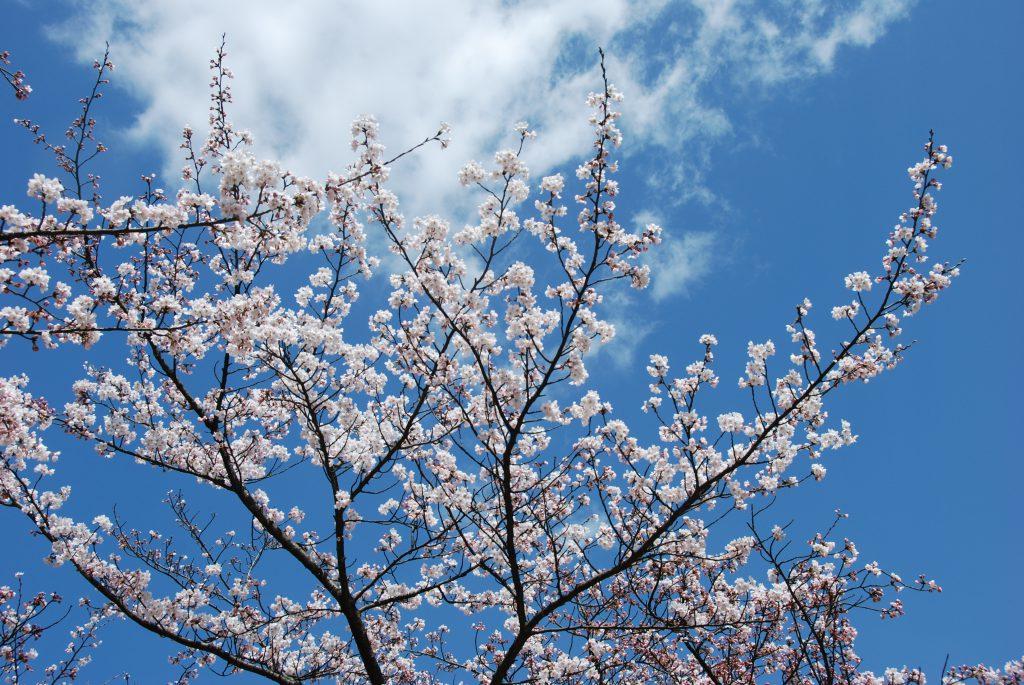 お花見日和🌸